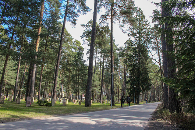 森の墓地針葉樹