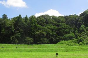 森の墓苑景観